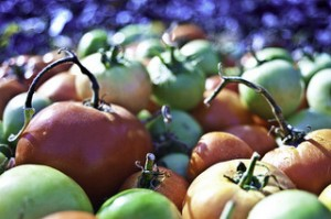 Tomatoes by Thelonious Gonzo (CC BY 2.0)